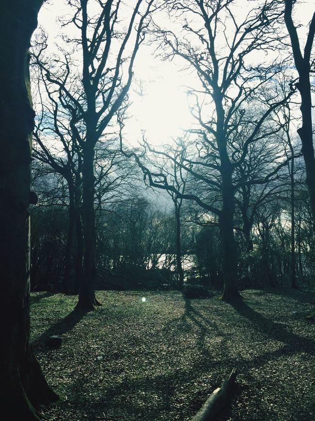 Athlone Ireland Portlick Bay GlassOn April April Showcase Holiday Misty Nature Walk Trees Spooky Walking