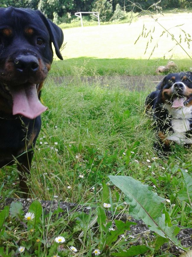 Look At This Check This Out Taking Photos With My Dog Freya Mit Rocky Hunderunde Hunde Liebe ♡ Hundefotografie Dogs Of EyeEm Life With Dogs Eyeem Dog Portraits Dogs EyeEm Dog Lover Dog❤ Hundeshooting Hundefreundschaft