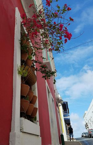 Day Architecture Red Sky Perspective Urban Exploration San Juan PR Popular City Life Architectural Detail Freshness Cityscape Beauty In Nature Sky And Clouds Bouganville Flower