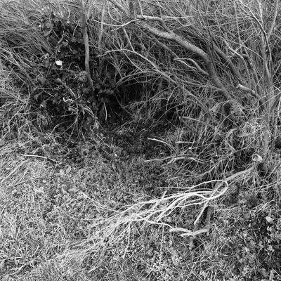 Guevorkaivazian Blackandwhite Nature_collection