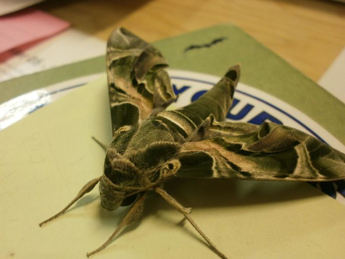 Beautiful Moth Beautiful Nature Close-up Giant Moth Green Color Insect Moth Multicolored Moth Nature