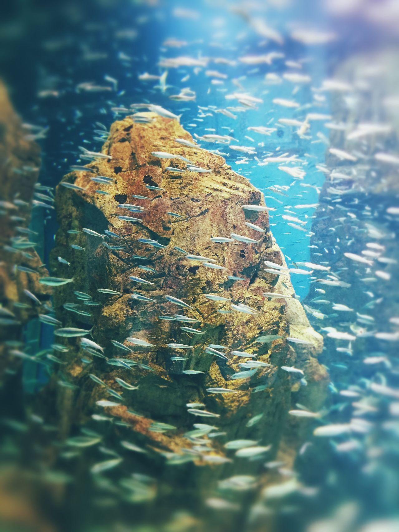 카이유칸- Water 물고기 카이유칸 일본 Japan Osaka, Japan