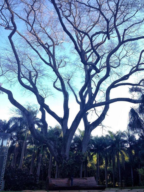 Instituto Inhotim - Brasil Tree Nature Outdoors EyeEm Gallery EyeEm Best Shots Modern Museum Brazil