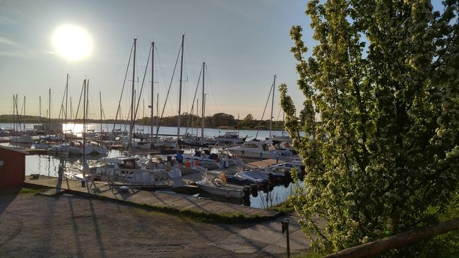 Sailboats in harbour at sundown Boat Day Germany Harbor Leisure Time Mast Mode Of Transport Nature Neuhof No People Outdoors Plant Sailboat Sailboatsonthebay Sky Sun Sunbeam Sunlight Sunny Water