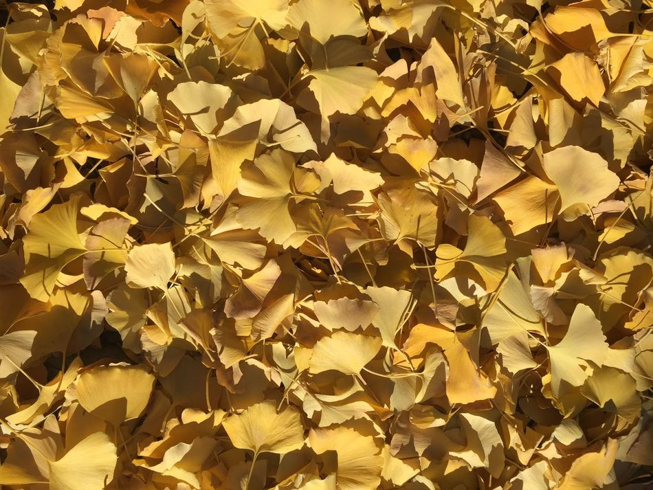Autumn Colors Autumn Leaves Fall Colors Yellow Golden