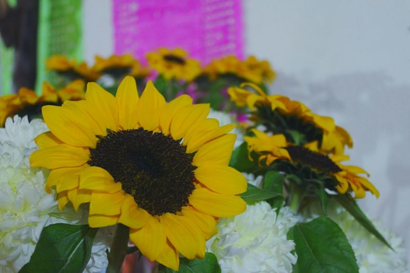 Color. Flower Fragility Flower Head Yellow Petal Freshness Close-up No People Beauty In Nature Day Nature Sunflower Ofrenda Al Dia De Muertos Dia De Muertos México Tradition Tradicionesmexicanas Mexico Arts Culture And Entertainment Indoors  Spirituality Plant Outdoors