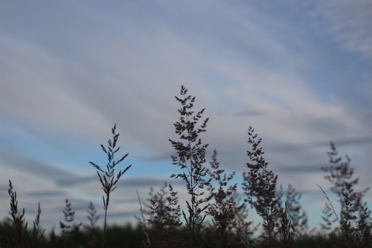 nature, growth, sky, tranquility, no people, plant, tree, tranquil scene, beauty in nature, day, outdoors, scenics