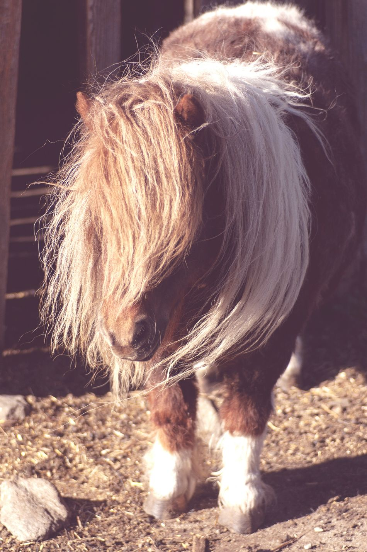 Beautiful stock photos of pony, , Animal Themes, Brunico - Bruneck, Building Exterior