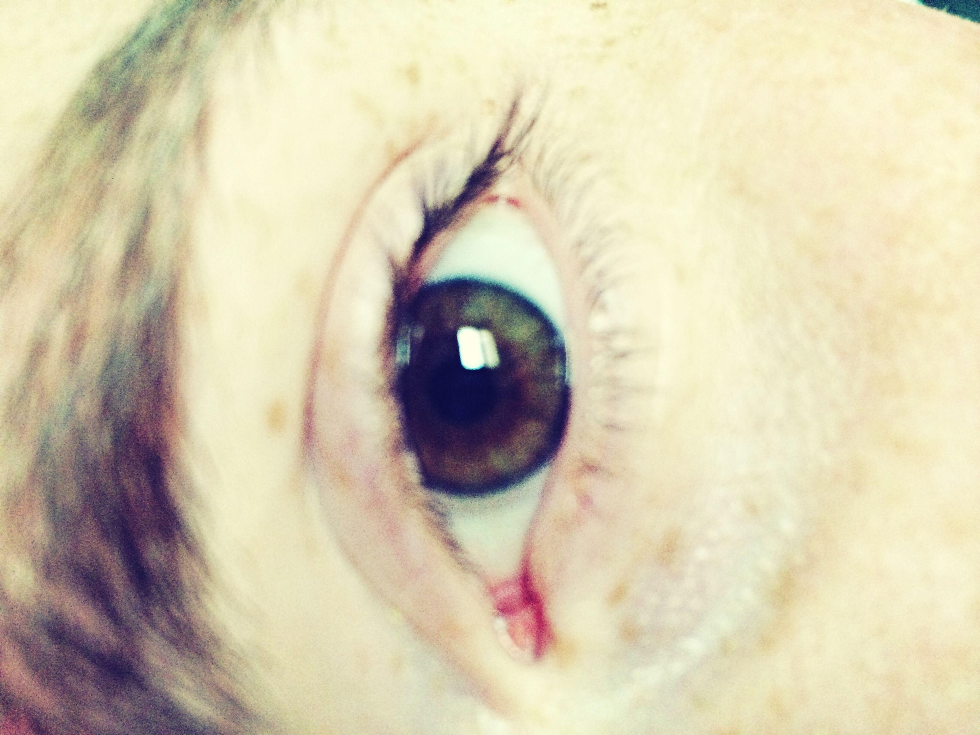 close-up, human eye, eyesight, portrait, looking at camera, part of, eyelash, sensory perception, indoors, extreme close-up, eyeball, pets, extreme close up, one animal, iris - eye, unrecognizable person, animal eye