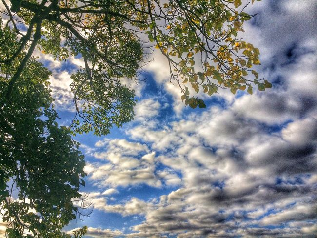 Tree_collection  Clouds And Sky Cloud_collection  Nature Photography