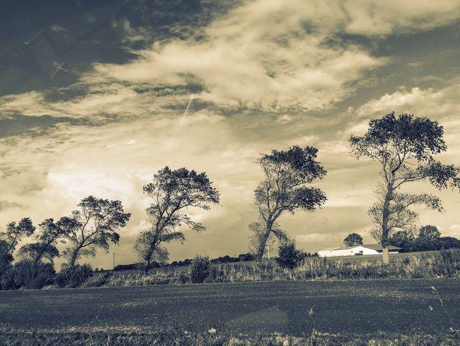 Tree Sky Landscape Beauty In Nature Scenics Tadaa Community Street Allee Windy Unity Samesamebutdifferent