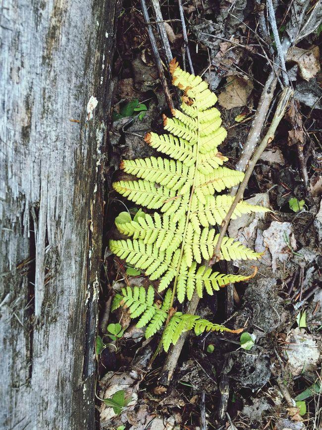 дерево Spring Tree Mossy Tree Wood - Material Moss On Trees Wood фактура папоротник Fern
