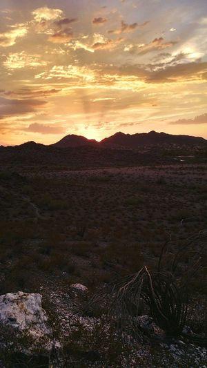 Arizona Sunset Nature Goodnight Ocotillo