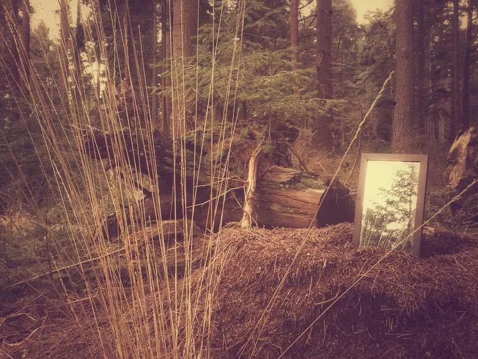 The magic mirror 😊 Forest Trees Vegetation Mirror Wood Reflection New Forest Rhinfield Nature Object Scene Atmospheric South Uk Natural Park Telling Stories Differently