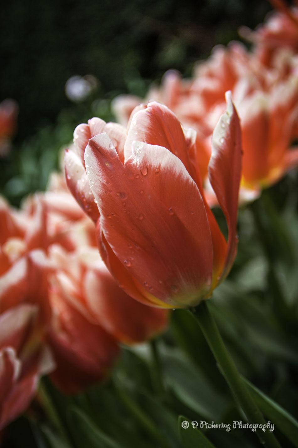 Missing Springtime Flower Collection EyeEm Best Shots Flowerporn Spring Flowers