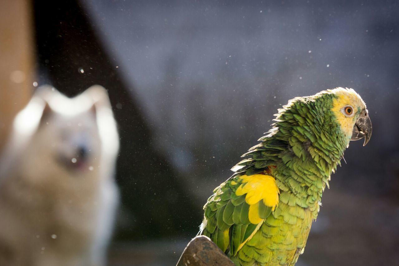 Parrot view profile