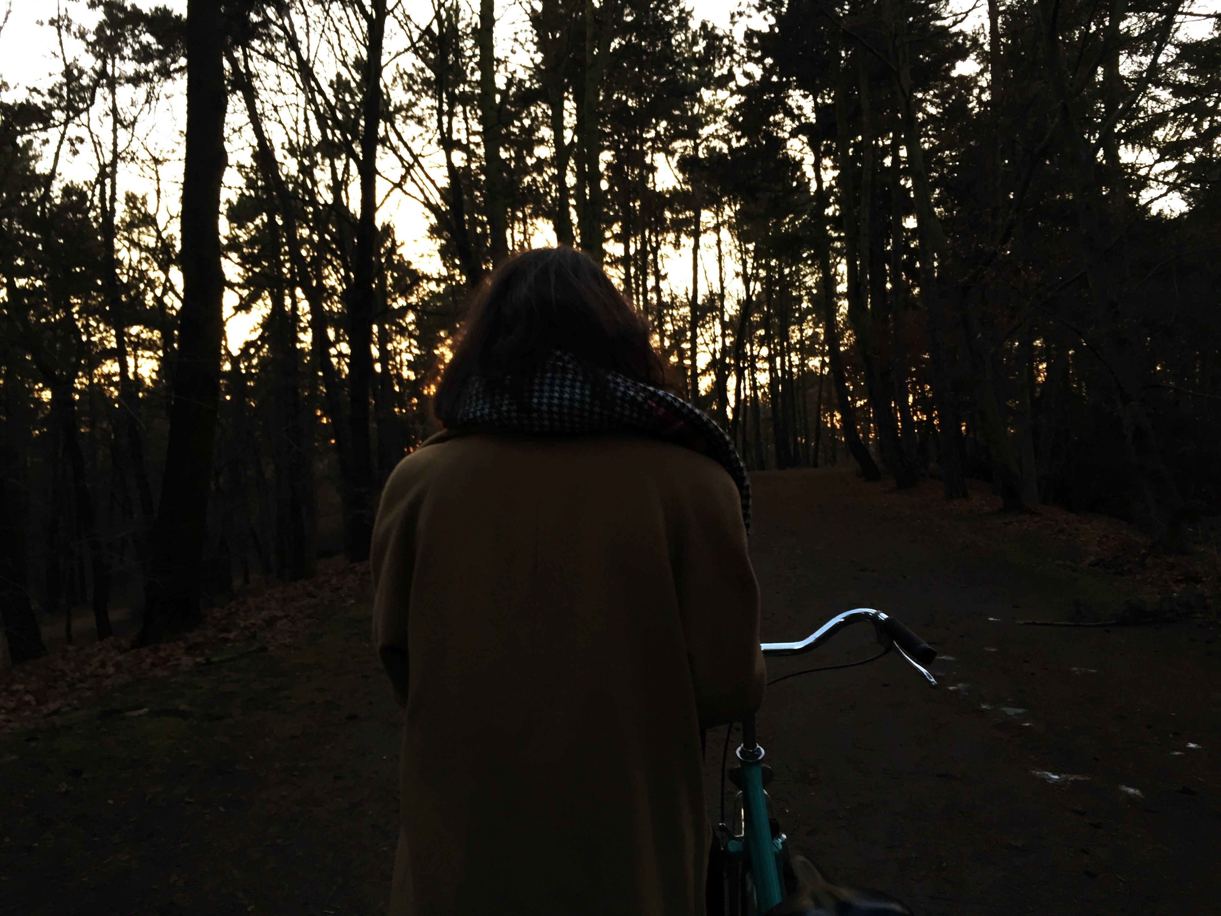 tree, lifestyles, rear view, men, leisure activity, tree trunk, transportation, forest, the way forward, tranquility, road, nature, sunlight, unrecognizable person, outdoors, tranquil scene, person, growth