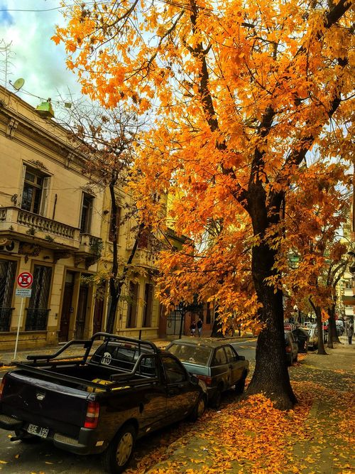 Fall In Barracas, Buenos Aires, Argentina. Fall Fall Colors Fall Beauty Fall Leaves Fallen Leaves Fall Season autumn Autumn Colors Autumn Leaves trees Street cityscape Buenos Aires Buenos Aires, Argentina  Iphone6splus IPhone 6s+ IPhone Only IPhoneography IPhone 6s Plus IPhone Photography IPhone Photos Iphonephoto IPhone
