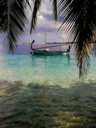 Beautiful Surroundings Holiday Relaxing Dhoni Palm Trees Natural Beauty! Landscapes With WhiteWall