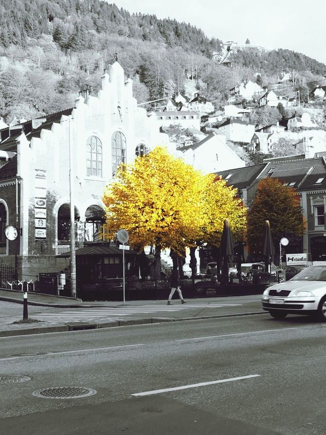 Bergen,Norway Autumn Leaves Beautiful Day Tree Autumn Colors Autumn Autumn Collection Street Yellow City Transportation Tree Car Mode Of Transport Architecture Building Exterior Travel Destinations Road City Street Built Structure Land Vehicle Outdoors Day No People
