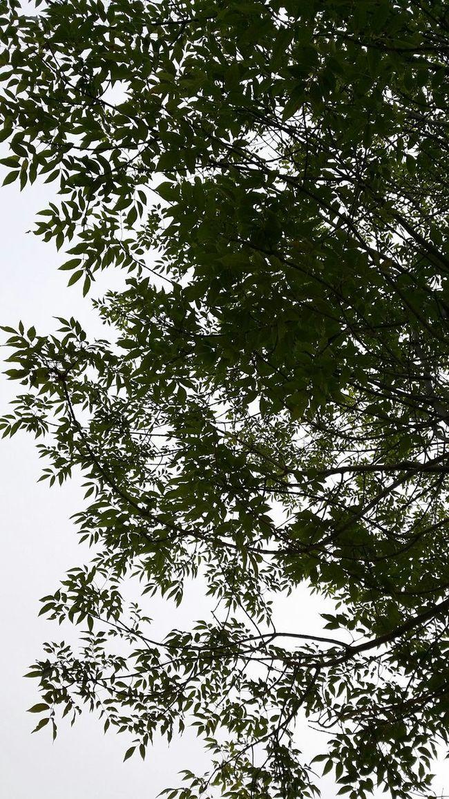 Naturaleza Shadow Relaxing