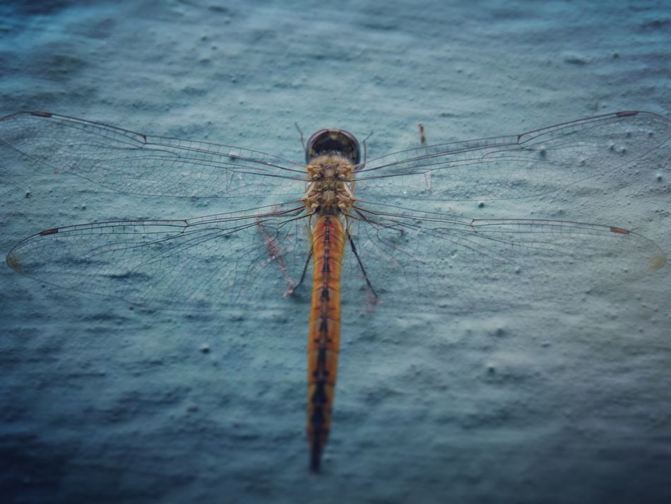 Dragonfly On Wall Under Light Back LookMacro Beauty Taking Photos Check This Out