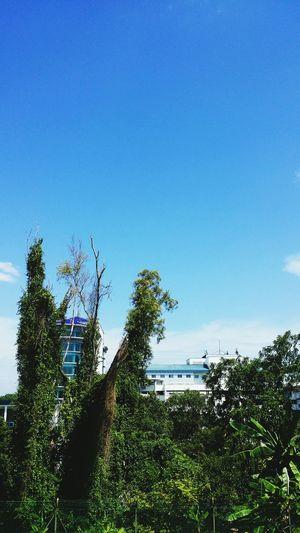 City Jungle Blue And Green Malaysia