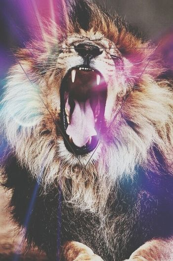 No sleep ☁ Lion Hipster Pic Loveit