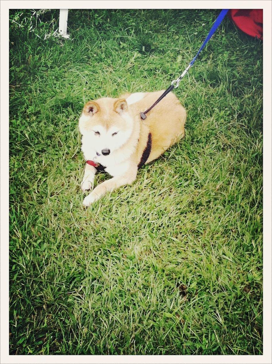 Foxy Dogs Pets Streetphotography AMPt Community