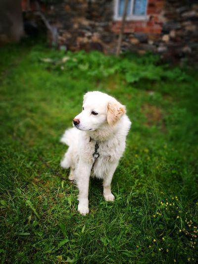 My dog Zorche