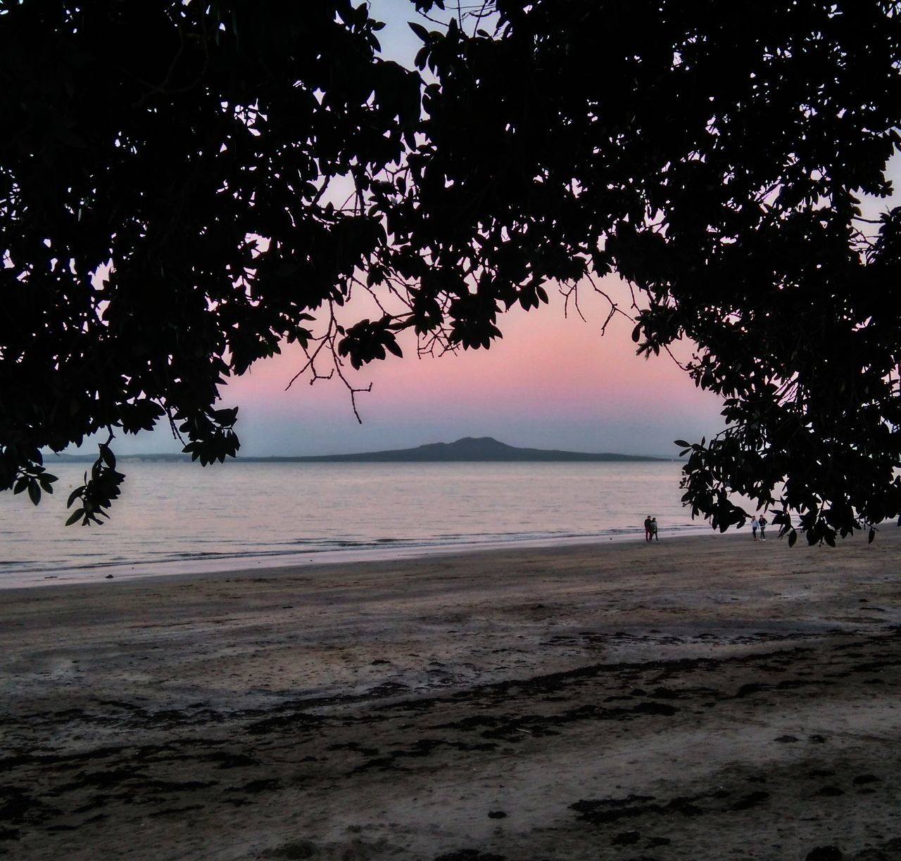Sunset New Zealand New Zealand Landscape New Zealand Beach Rangitoto
