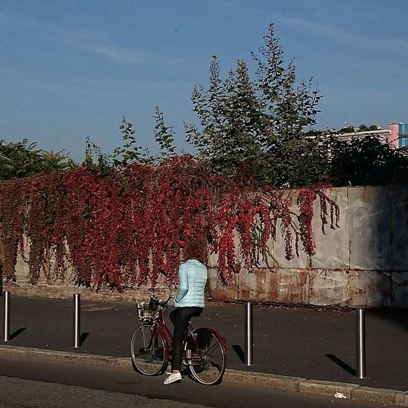 Assimpleasthat Autumn Bycicle Red and Blue Milan Streephotography