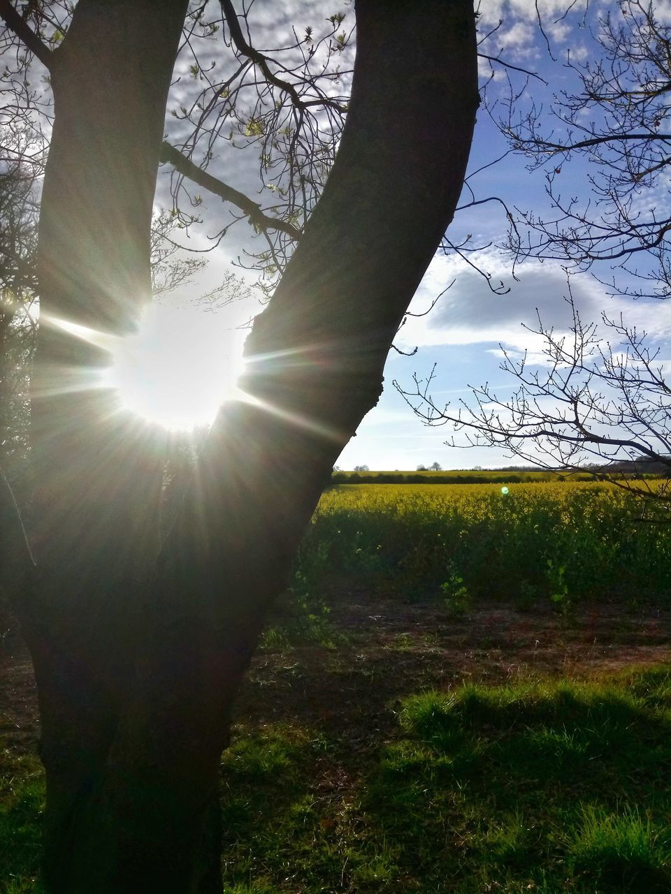 sunbeam, nature, sun, lens flare, sunlight, tree, field, grass, day, outdoors, growth, beauty in nature, sky, landscape, branch, plant, tree trunk, bare tree, no people, close-up