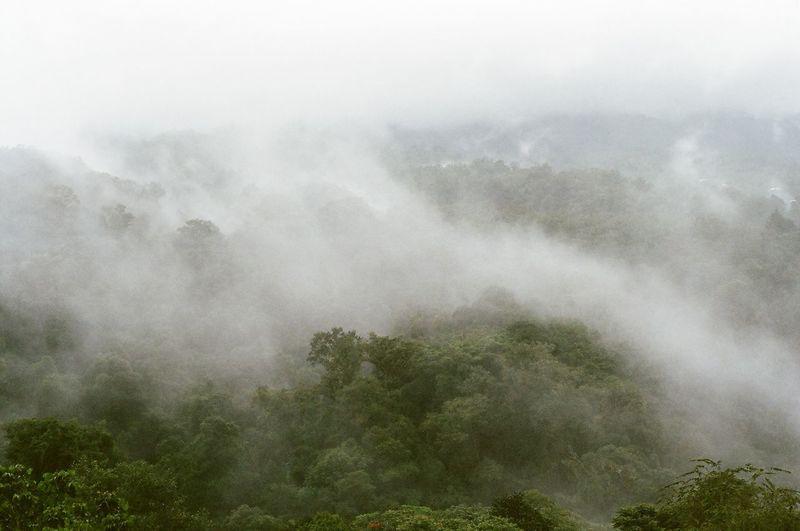 Melancholic Landscapes Fog Costa Rica 35mm Film