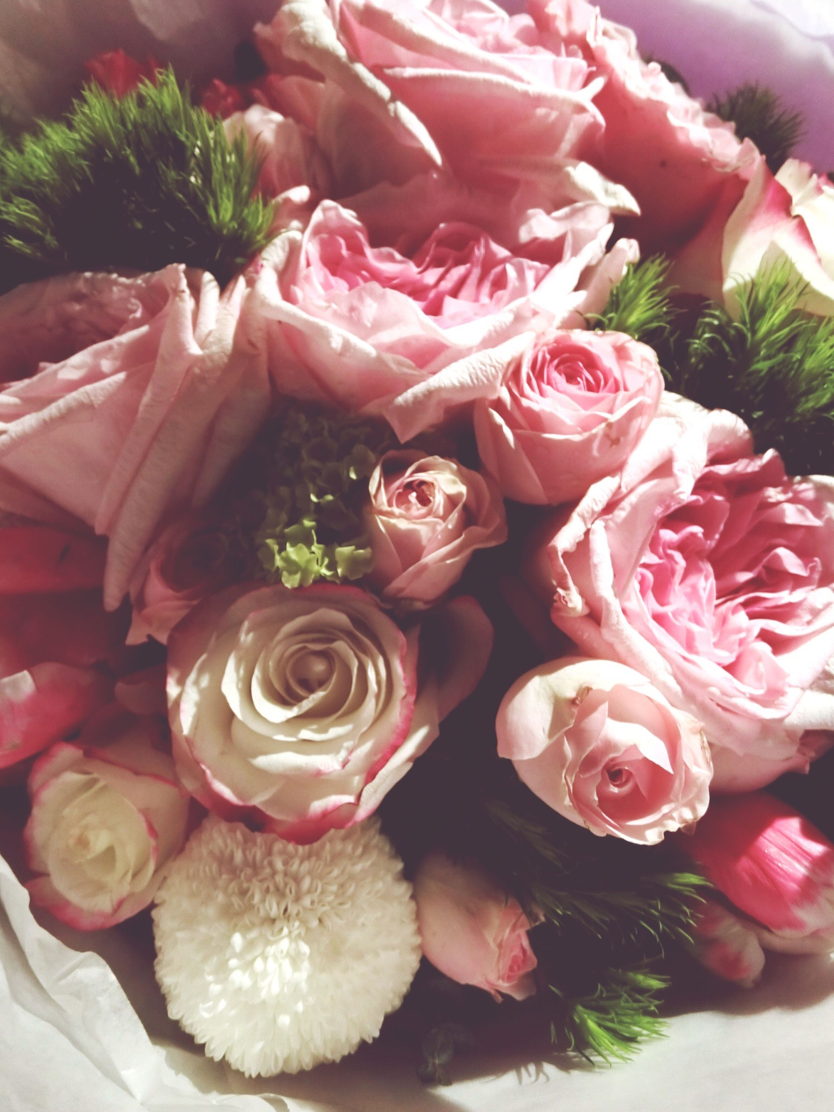flower, freshness, petal, fragility, flower head, pink color, beauty in nature, rose - flower, close-up, indoors, nature, growth, bouquet, high angle view, pink, plant, bunch of flowers, no people, blooming, rose
