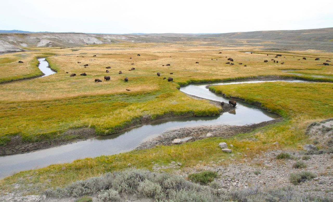 Beautiful stock photos of meadow, American Bison, Animal Themes, Beauty In Nature, Clear Sky