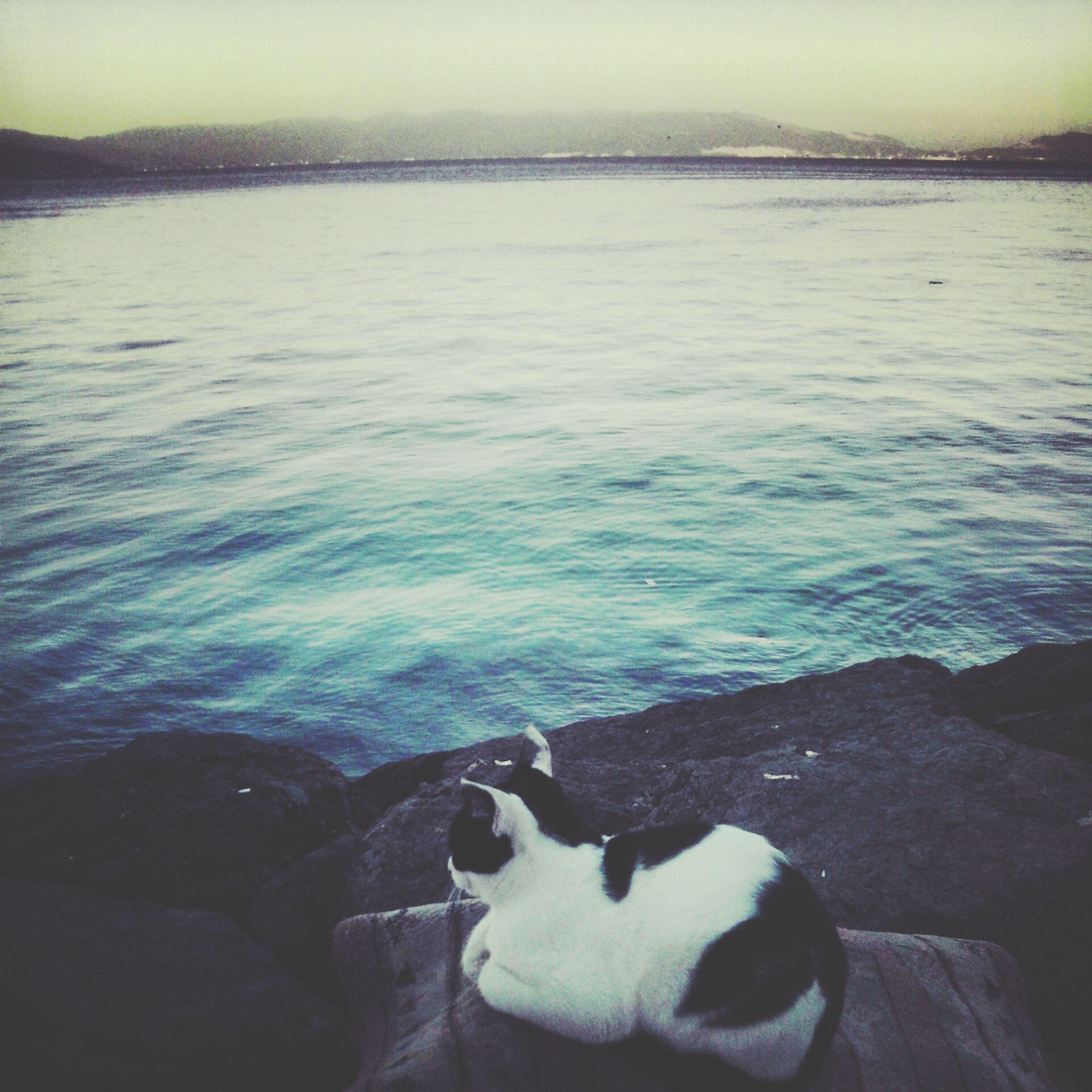 Popular Photos Sea Cat View