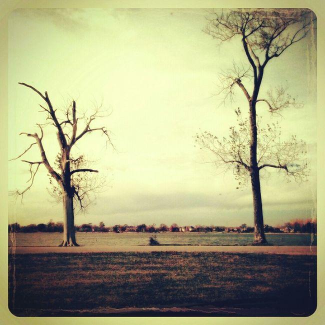 Ilovebaretrees