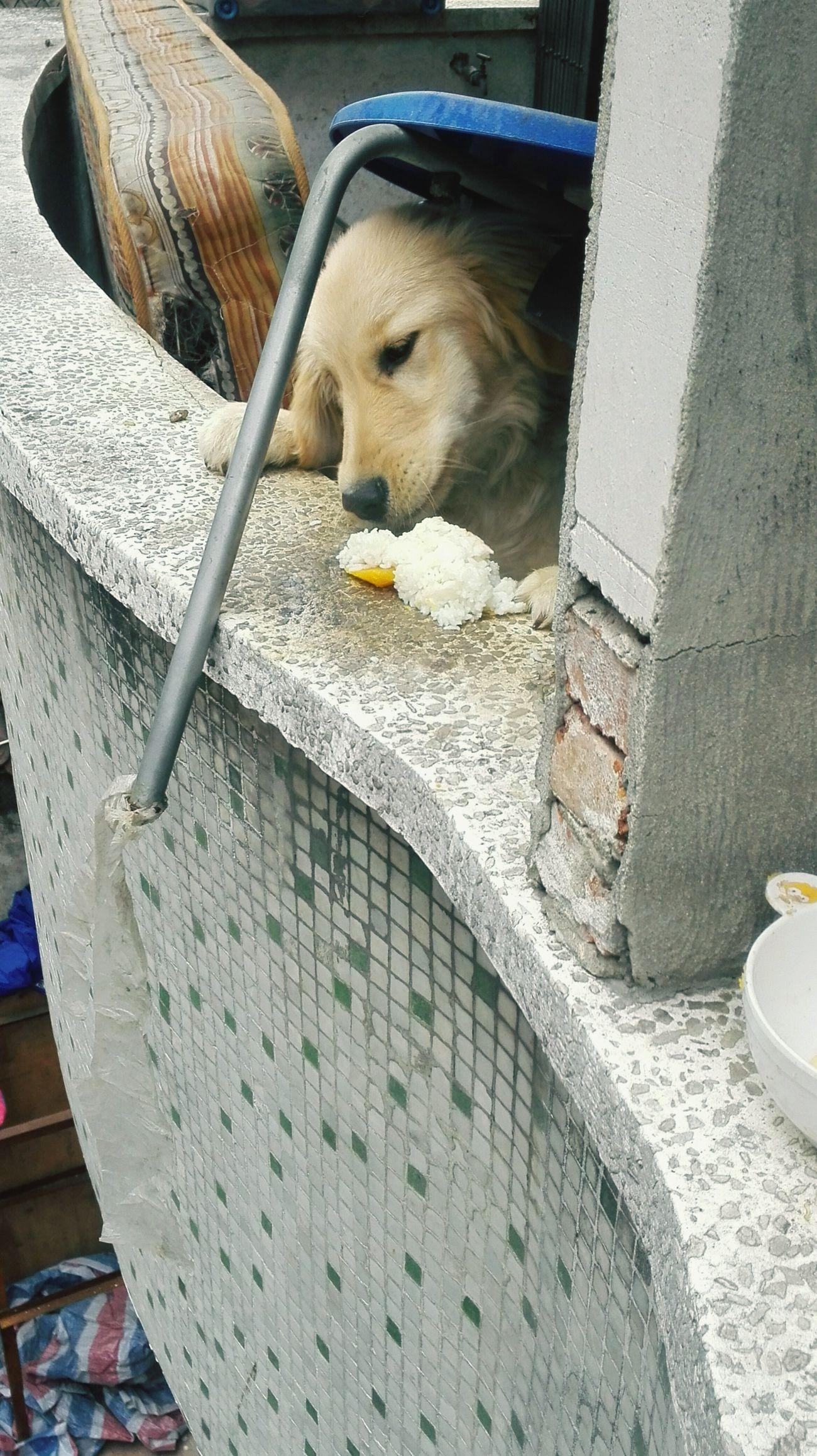 如果你没有足够的耐心爱心和责任感,就不要轻易的介入它的生命 Animal Pet Care