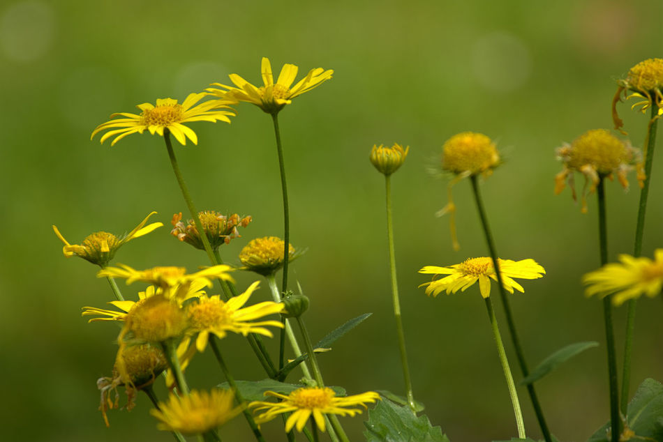 Flower Green Color Yellow Nature Plant Leaf Summer No People Outdoors Living Organism Fragility Beauty In Nature Day Close-up Flower Head Freshness Greenery Outdoor Beauty EyeEm Nature Lover Outdoor Pictures Outdoor Freshness Beauty In Nature Green Color Focus On Foreground