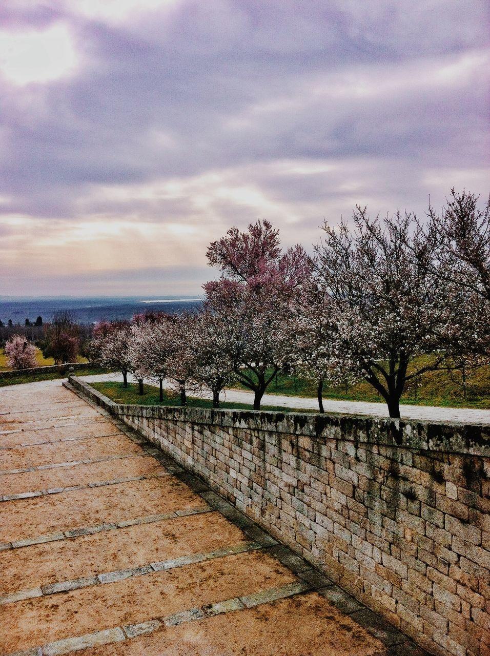Treelined Path In Park