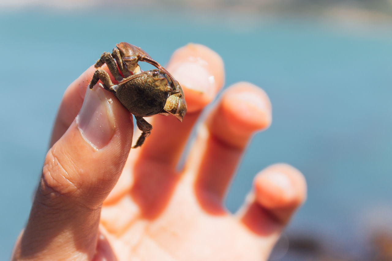 human hand, real people, human body part, one person, human finger, one animal, focus on foreground, close-up, outdoors, holding, animals in the wild, animal themes, animal wildlife, day, sunlight, hermit crab, nature, beauty in nature, sky