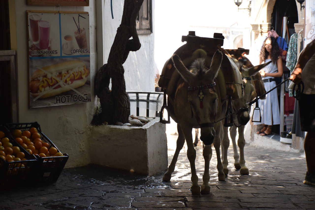 Animal Donkey Geece Greek Donkey Lindos Working Animal
