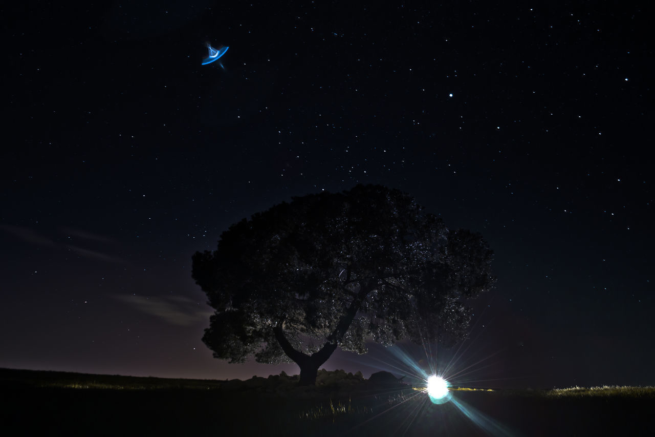 Astronomy Beauty In Nature Constellation Galaxy Nature Night No People Outdoors Scenics Silhouette Sky Space Space And Astronomy Star - Space Star Field Tree