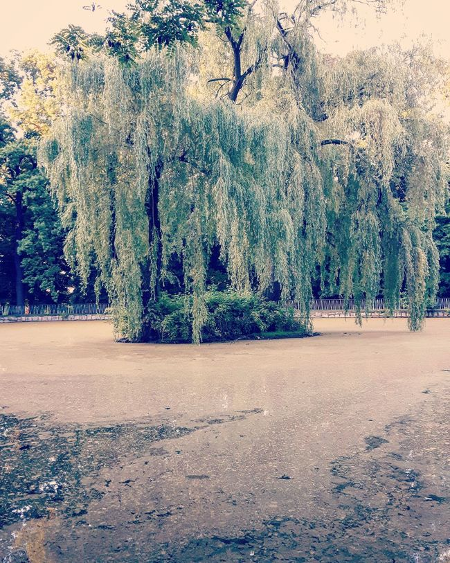 Poland Świdnica Bad Photo Photography Photooftheday Picoftheday Sad Mood Summer Best  Bestoftheday Nature 2016 Nice Pond Dirty Water Tree Littered Lamentable