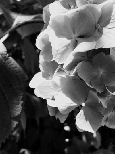 Bwflower Bw_flower Flower Photography Blackandwhitephotography Black And White EyeEm Gallery Bw_lovers Bw_shotz Monochrome
