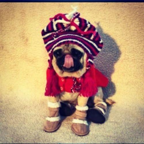 Christmas Pugsrequest Puppy Pet Pug Instagramers Doglover Dogsofinstagram