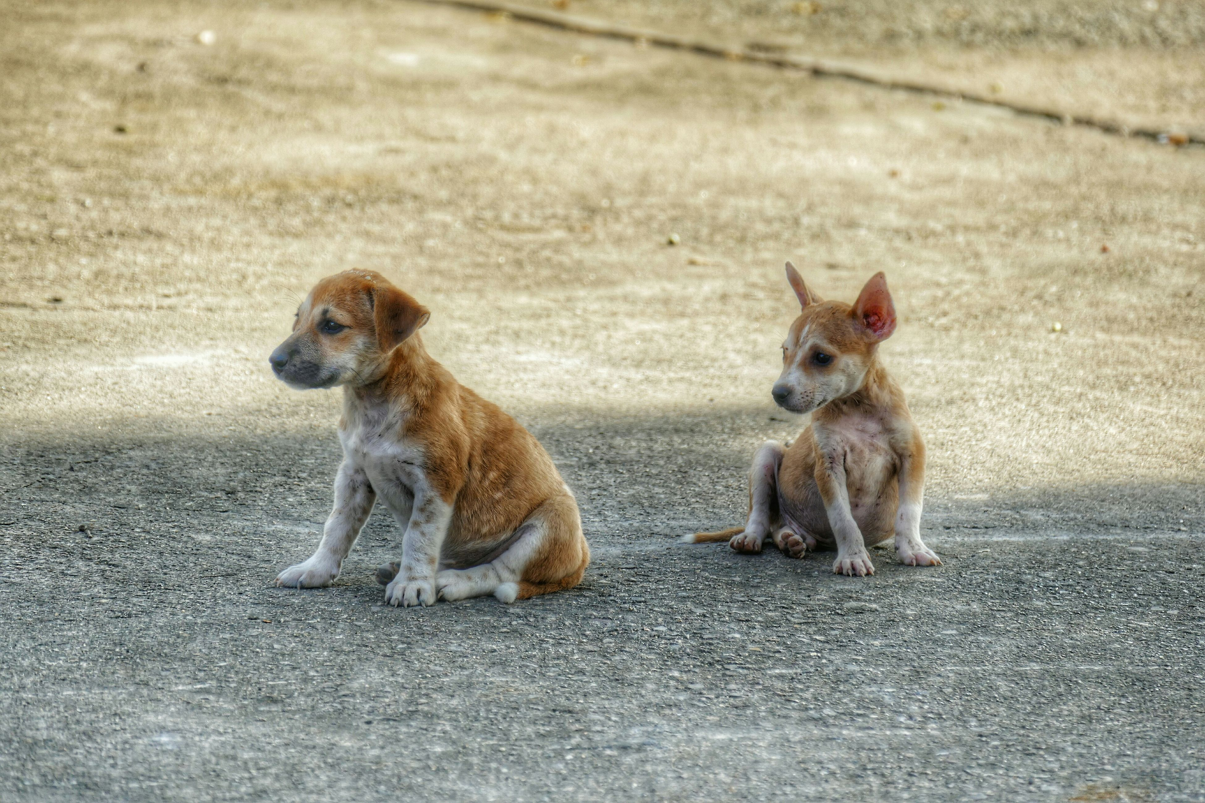 animal themes, mammal, one animal, domestic animals, pets, full length, dog, two animals, focus on foreground, young animal, sitting, animals in the wild, day, outdoors, wildlife, looking away, walking, street, selective focus, monkey