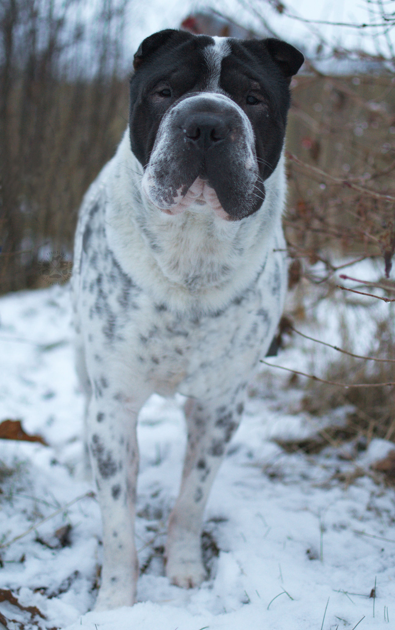 One Animal Animal Themes Domestic Animals Pets Dog Looking At Camera No People Nature Outdoors Schnee Snow Cold Temperature Hund Dog Photography Hundefotografie Braunschweig Celle Hannover, Germany Looking At Camera Nature Natur