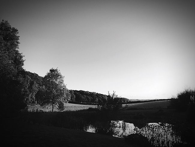 Tree Nature Tranquil Scene Tranquility No People Beauty In Nature Clear Sky Outdoors Landscape Day Growth Scenics Sky Monochrome Photography Beauty In Nature
